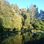 Le jardin en automne - Studio résidentiel La Boite à Meuh
