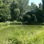 Le jardin en été - Studio résidentiel La Boite à Meuh