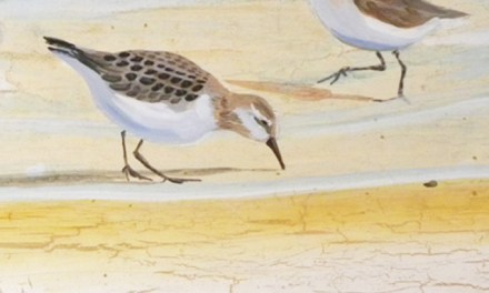 Cottage Furniture With Sandpiper Birds On The Beach