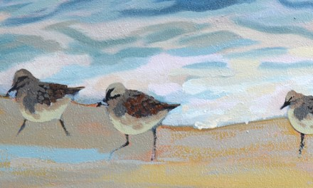 Sandpiper Birds Painting Update