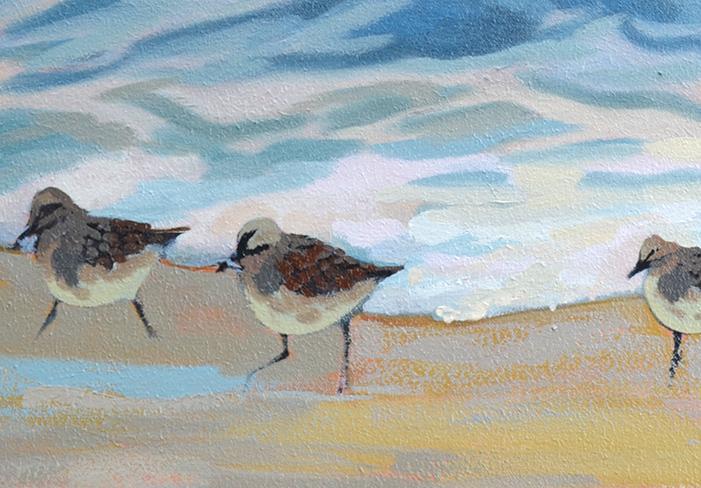 Sandpiper Birds Painting Update