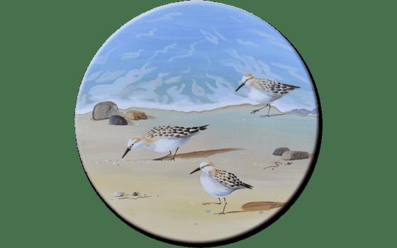 sandpiper birds running on the beach