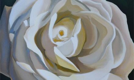White Rose Flower Closeup
