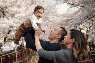 Jinhae Cherry Blossom Festival Yeojwacheon Stream Family Portrait Photographer South Korea-5
