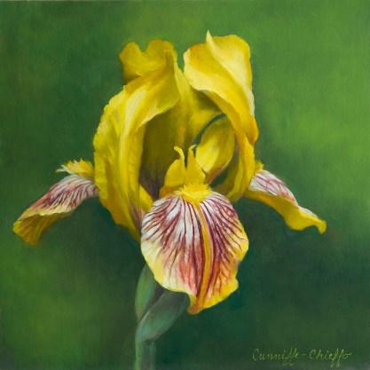 "Eye of the Iris, oil on copper, 8"" x 8"""