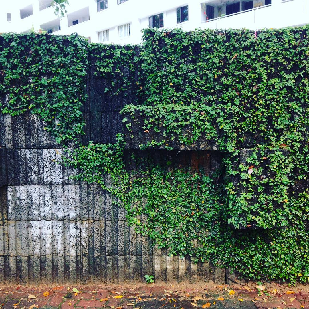 A little glimpse of Laputa  #hdb #living #walkingaftertherain #singapore #laputa #miyazaki #ghibli