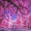 Forsyth In The Pink by Dan Kaufman, Studio Kaufman LLC