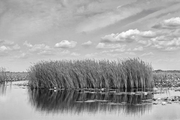 Reed Clump by Dan Kaufman, Studio Kaufman