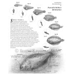 Development of summer flounder