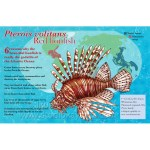 red lionfish scientific illustration poster