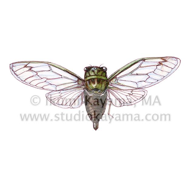 scientific_cicada627