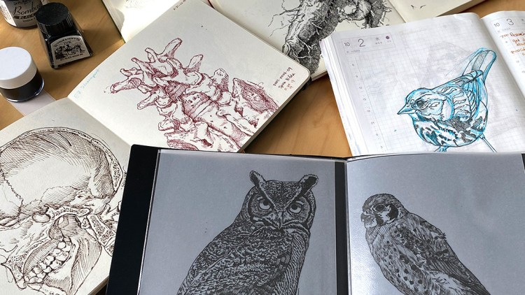 Inktober art spread out on table. Drawings of birds, human spine, etc.