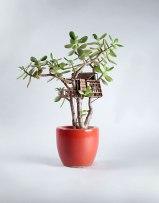 miniature-treehouse-houseplants-somewhere-small-jedediah-corwyn-voltz-6