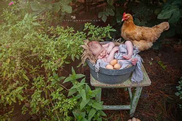 Outer_Banks_newborn_photographer_chicken