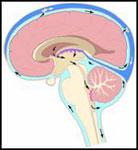Il Liquido Cefalorachidiano (o liquor cerebrospinale) in Osteopatia Biodinamica