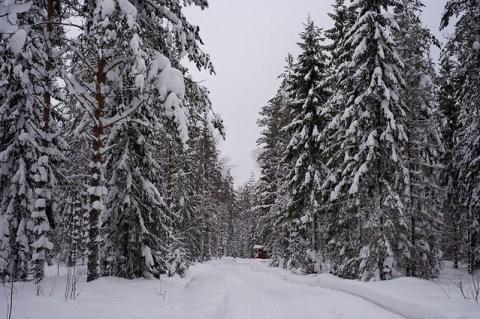 snowy forest in Jyväskylä 2012