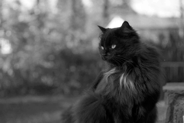 Black cat in Ylinen Finland 2003