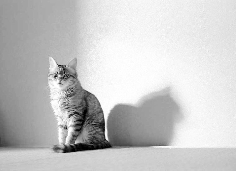 Cat and Shadow 2003
