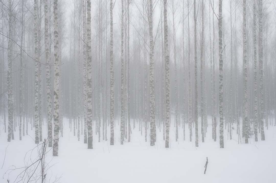 Winter Forest in Finland 2012