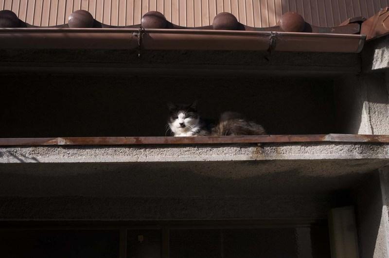 Cat on the Roof, Dec. 2020 Nagoya