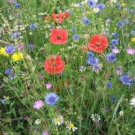 bloemenweide tuinarchitect 2