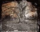 Denny Moers, Beech Tree #1