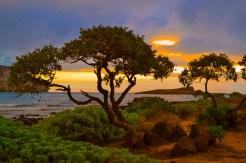 Caitlin Osso, Safari Sunrise