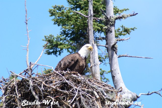 Eagle GEP_8381