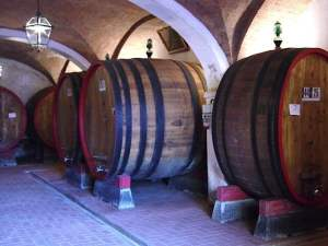 piwnice Torcalvano, leżakuje wino Nobile
