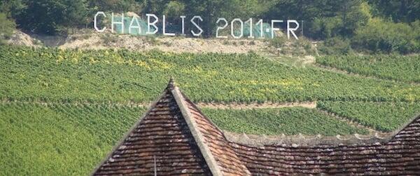 chablis-winnice-StudioWina