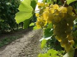 patria - studio wina - wrzesień