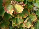 patria - studio wina