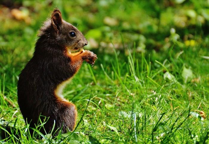 squirrel-1506971_1280