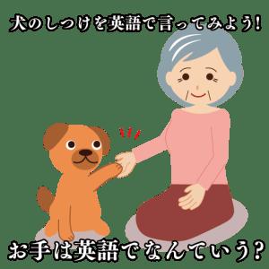 犬のしつけ英語