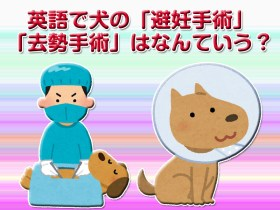 英語で犬の避妊・去勢手術はなんていう?