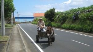 Azorean Culture