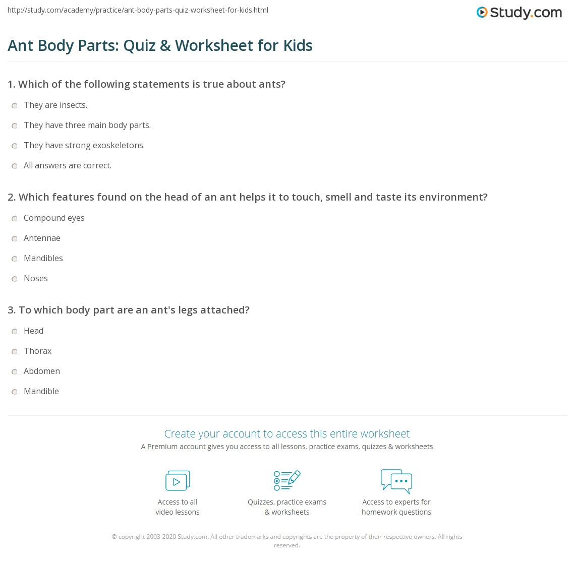 Ant Body Parts Quiz Amp Worksheet For Kids
