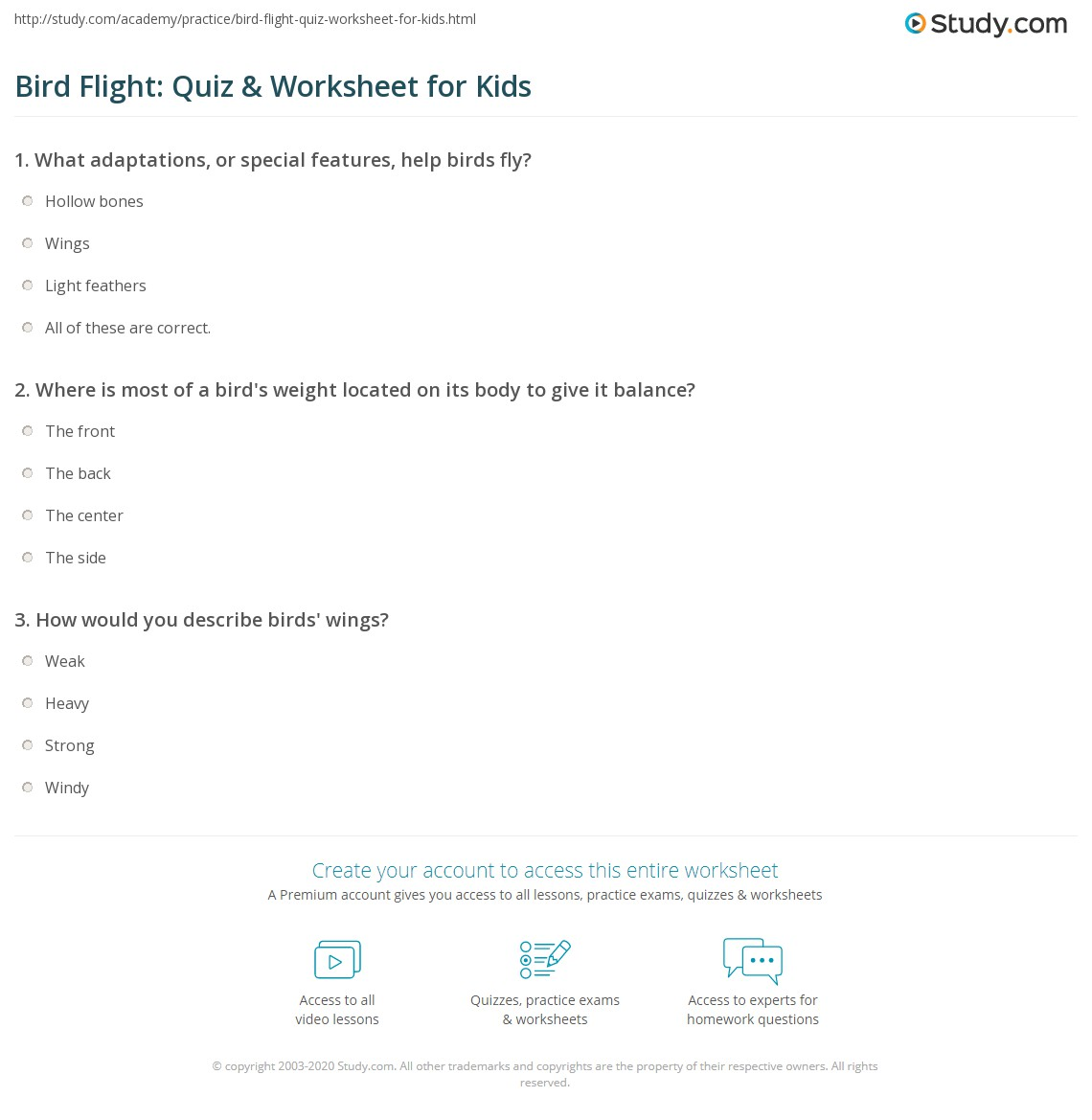 Bird Flight Quiz Amp Worksheet For Kids