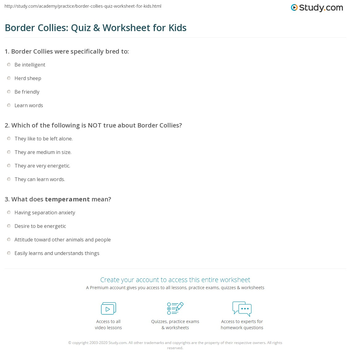 Border Collies Quiz Amp Worksheet For Kids