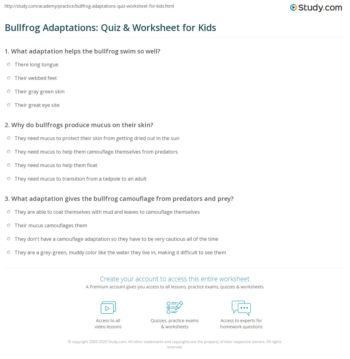 Bullfrog Adaptations Quiz Amp Worksheet For Kids