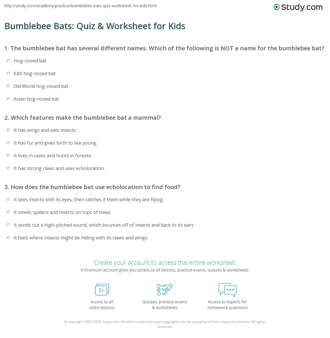 Bumblebee Bats Quiz Amp Worksheet For Kids