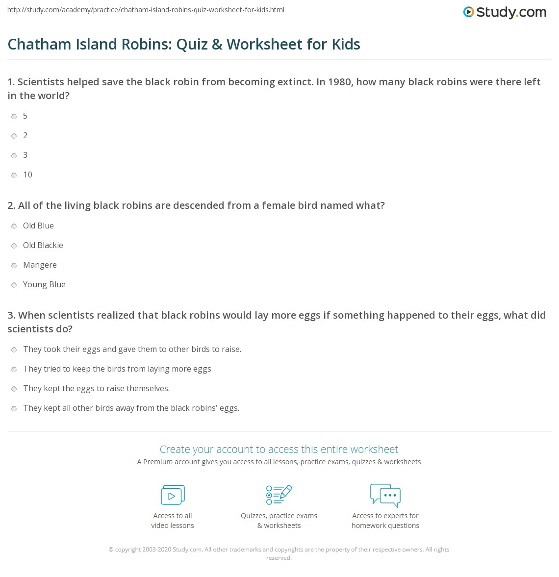 Chatham Island Robins Quiz Amp Worksheet For Kids