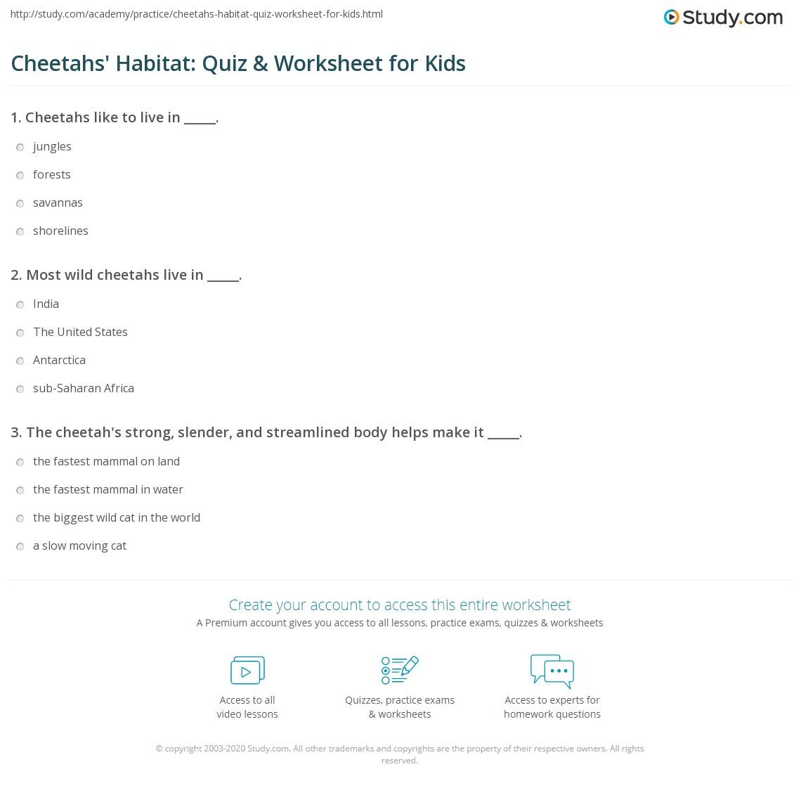 Cheetahs Habitat Quiz Amp Worksheet For Kids