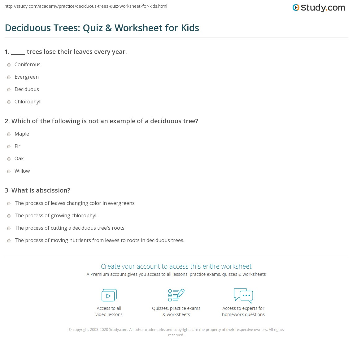 Deciduous Trees Quiz Amp Worksheet For Kids