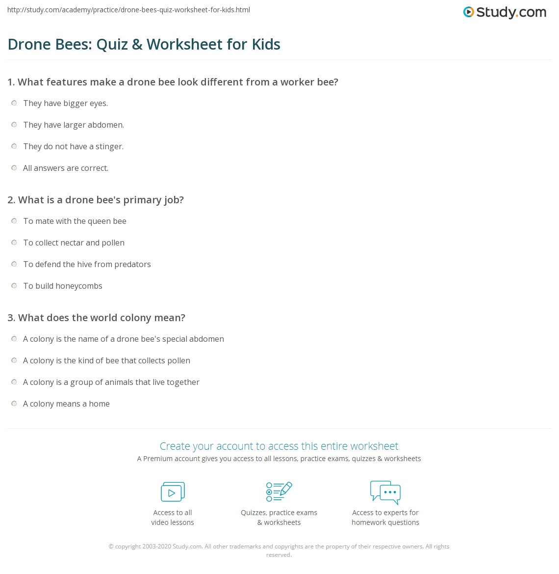 Drone Bees Quiz Amp Worksheet For Kids