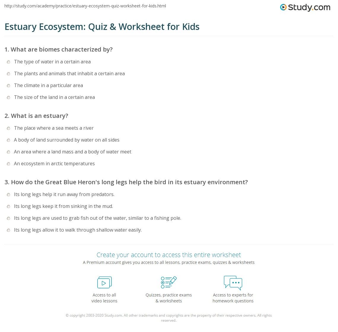 Estuary Ecosystem Quiz Amp Worksheet For Kids
