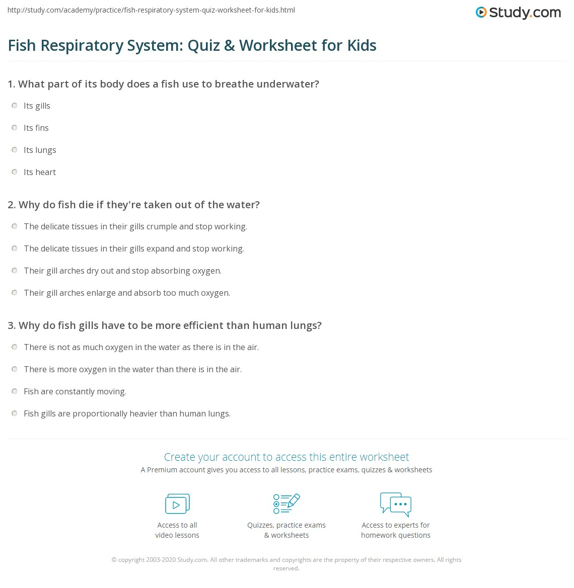 Fish Respiratory System Quiz Amp Worksheet For Kids