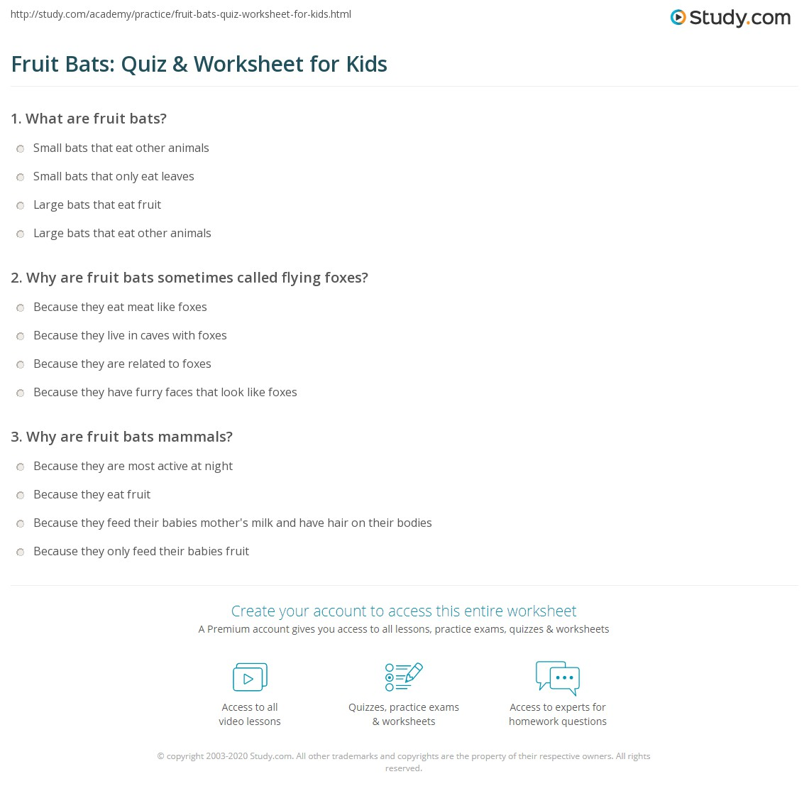 Fruit Bats Quiz Amp Worksheet For Kids