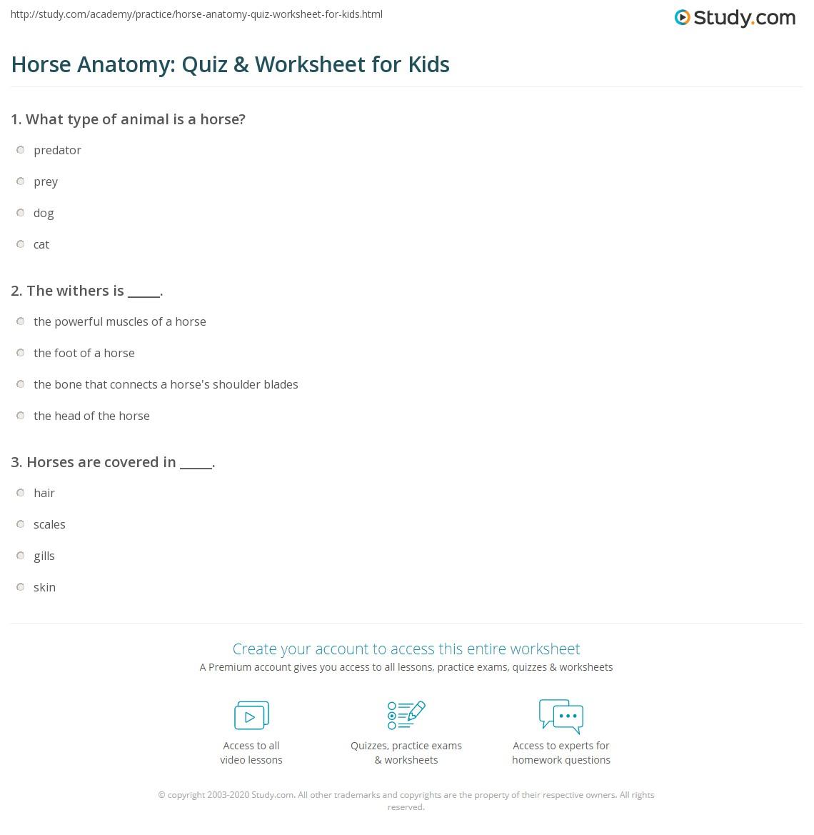 Horse Matching Worksheet