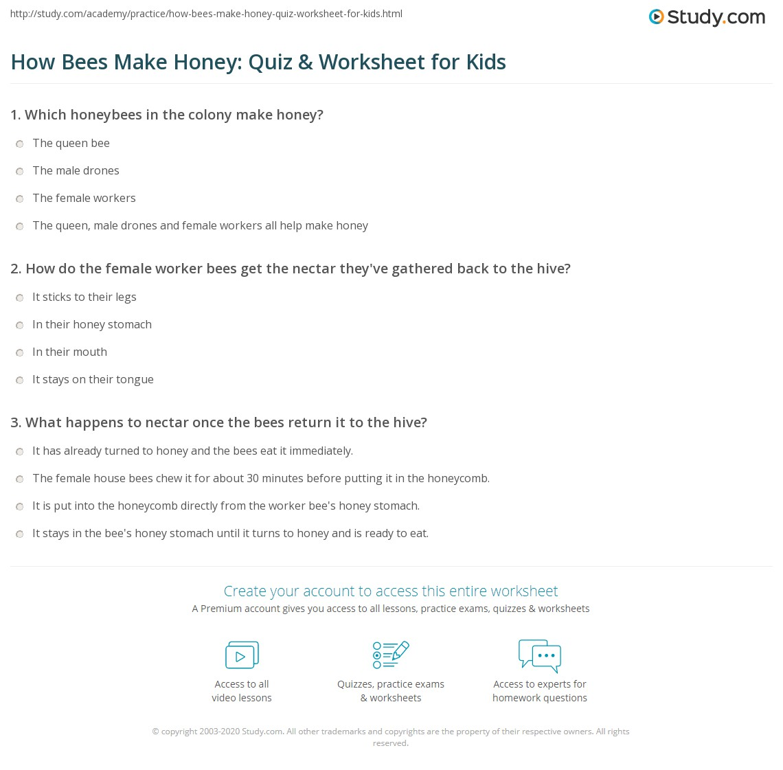 How Bees Make Honey Quiz Amp Worksheet For Kids